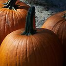 Pumpkins by Starr1949