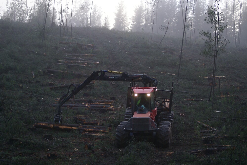 early morning logging by simonsinclair