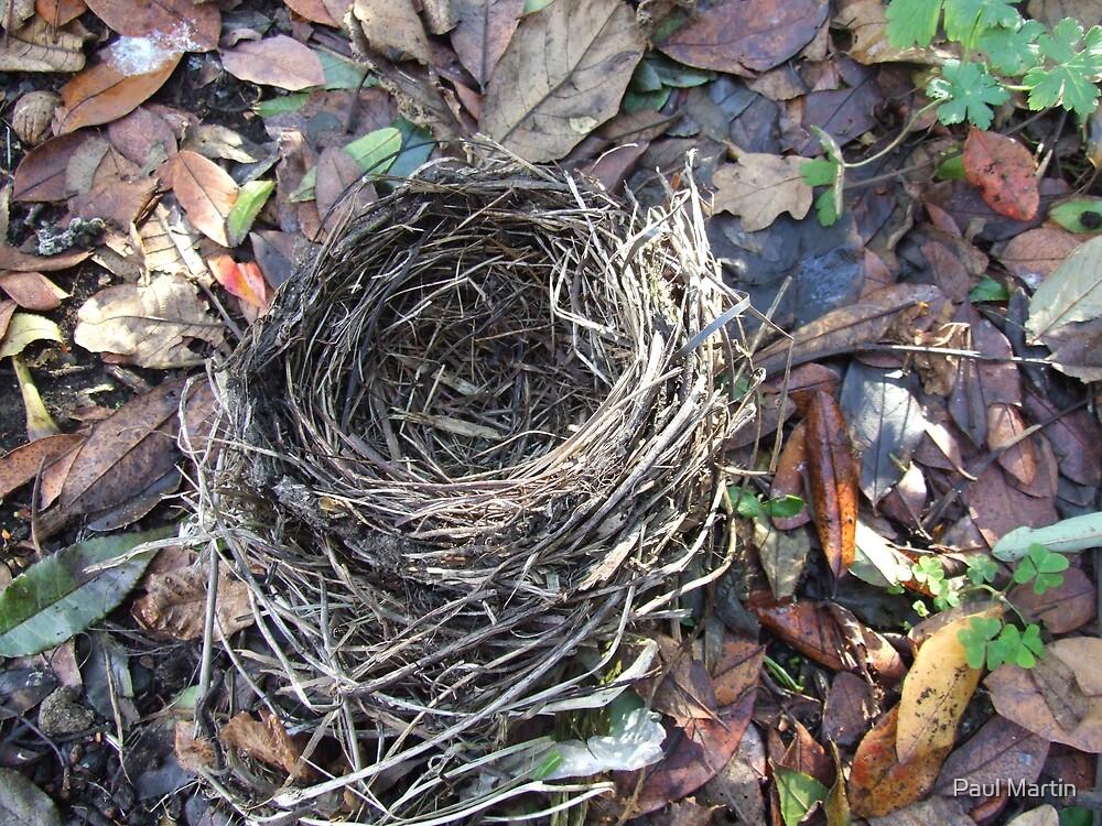 The Blackbird's nest by Paul Martin