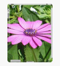 Purple Osteospermum Against Green Leaves iPad Case/Skin
