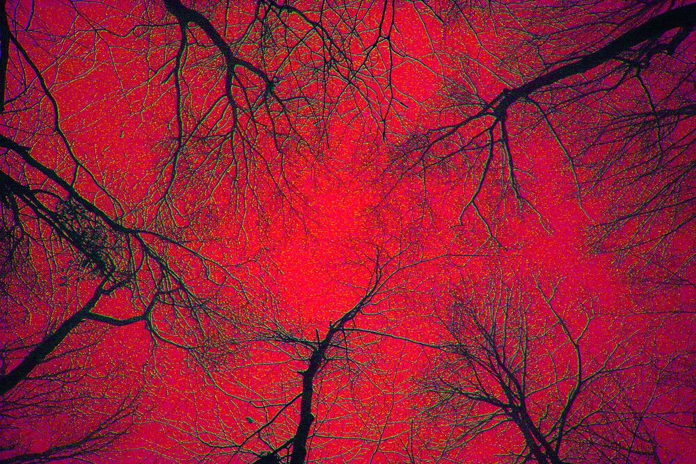 Tree Tops- Red by Hayley Evans