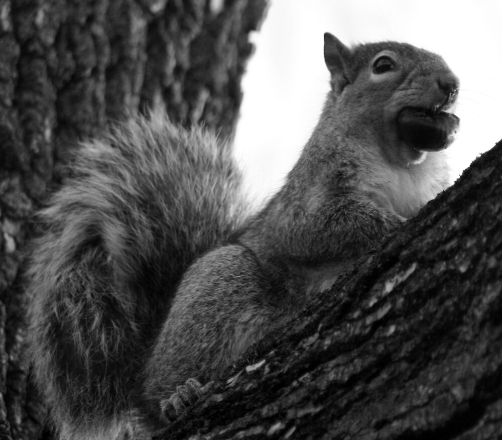 Squirrel with Nut by Hayley Evans