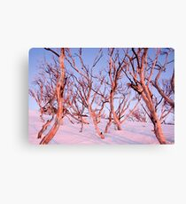 Pink Snow Gums Canvas Print