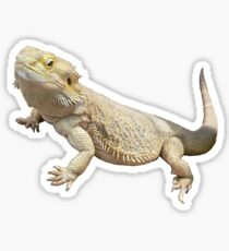 Bearded Dragon Sticker