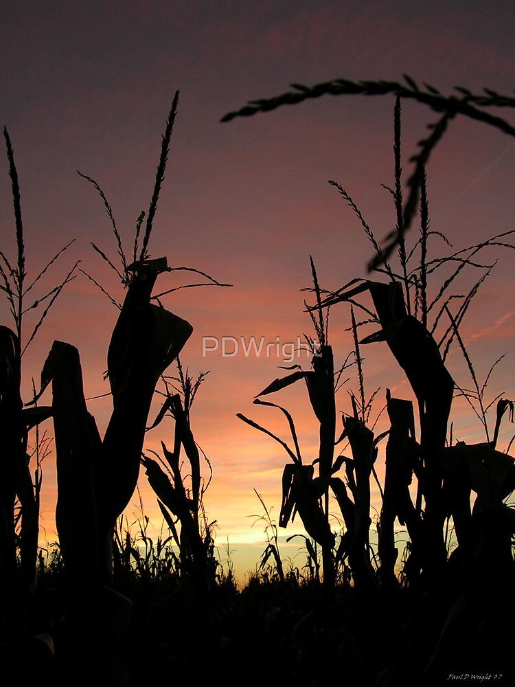 Sunset among the Rows by PDWright