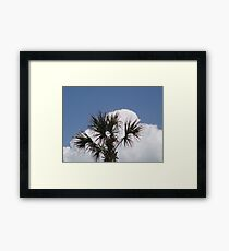 Palm Tree Myrtle beach Framed Print