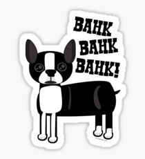 Boston Accent Terrier Sticker