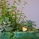 succulents by fabreplus
