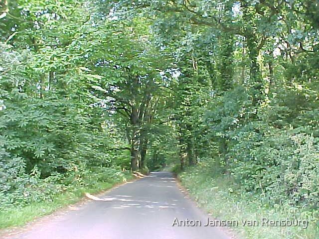 Forest view by Anton Jansen van Rensburg