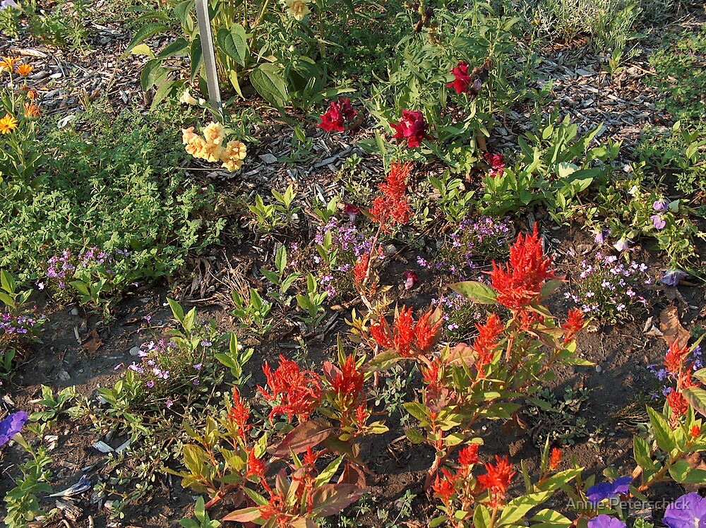 Fire Flowers by Annie Peterschick