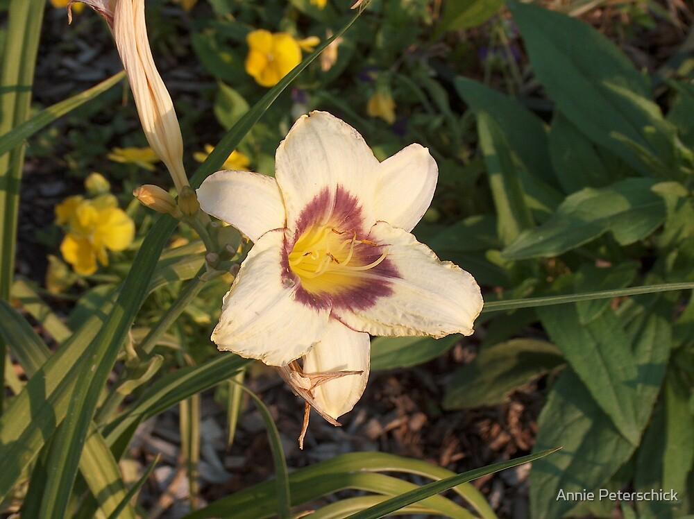 White Flower  by Annie Peterschick