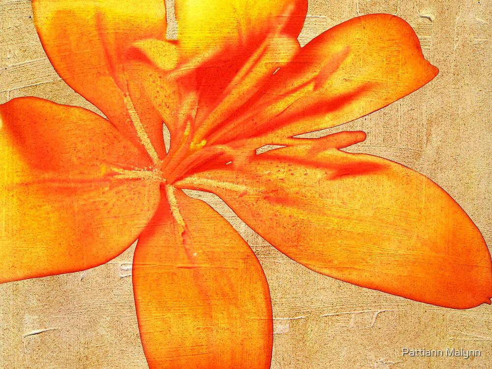Daylily  by Pattiann Malynn