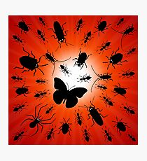 night insects Photographic Print