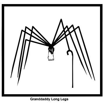 Granddaddy Long Legs by PaulOddo