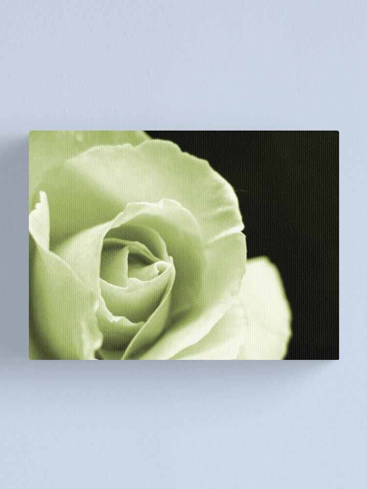 Alternate view of Rose Mono Canvas Print