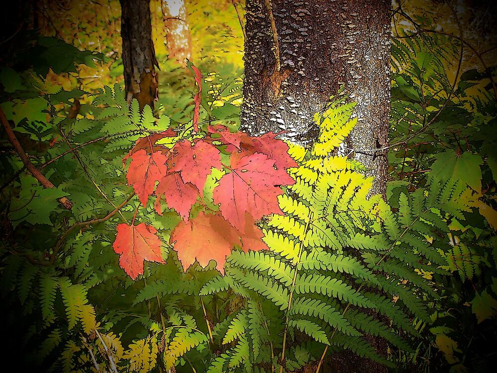 Forest by Gene Cyr
