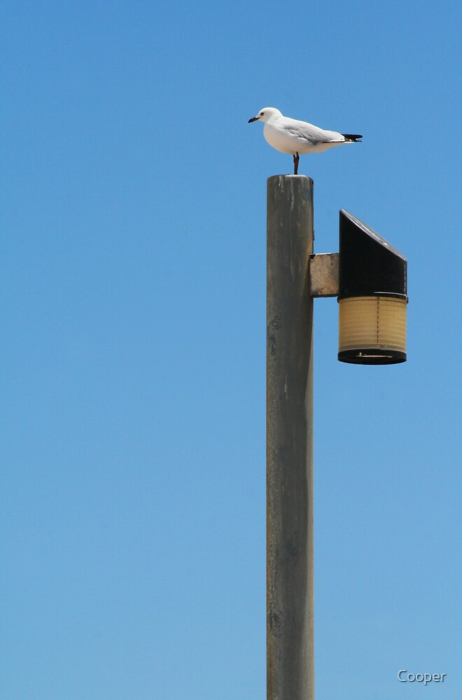 Seagull sitting on a pole by Cooper