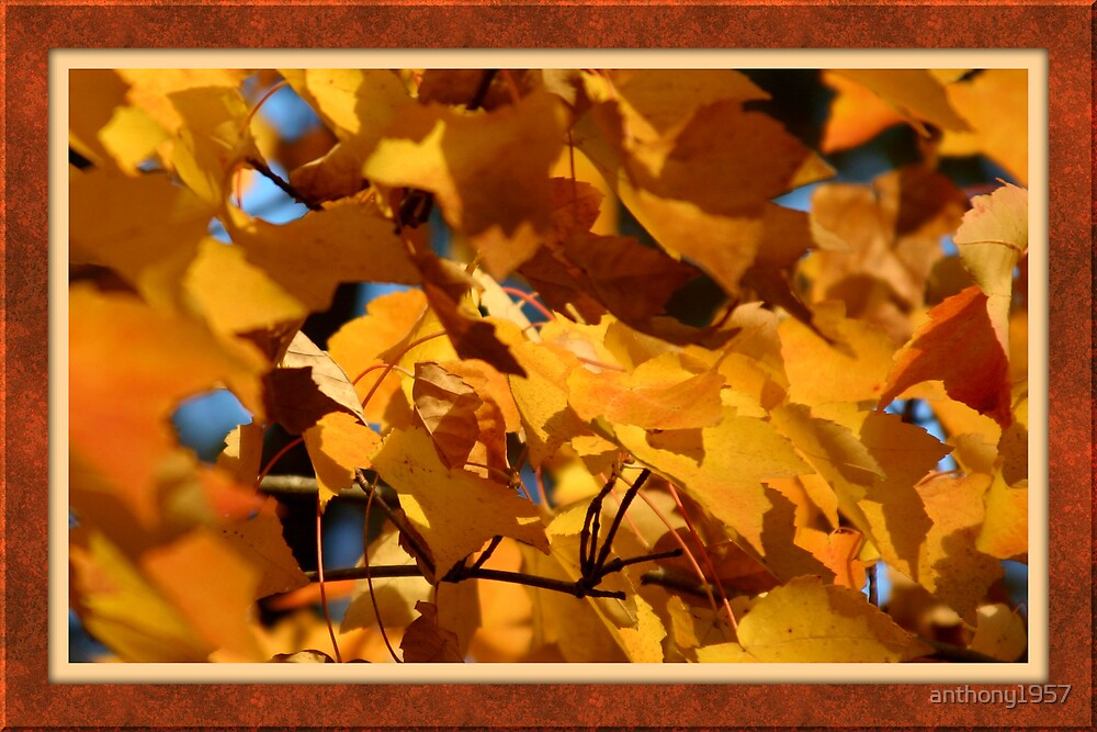 Autumn Gold by anthony1957