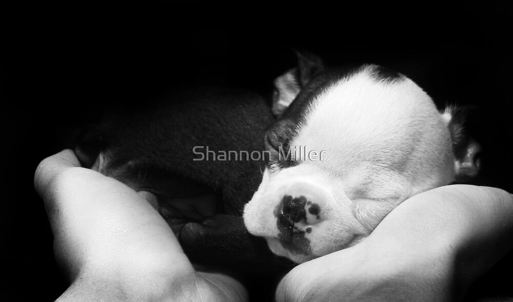 baby Bella by Shannon Miller