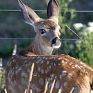 bambi by wjfind