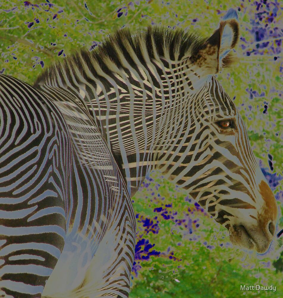 Zebra Head by Matt Dawdy