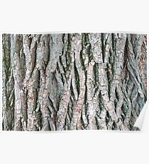 Tree bark background Poster