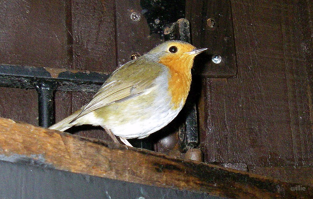 Robin@Windermere by willie