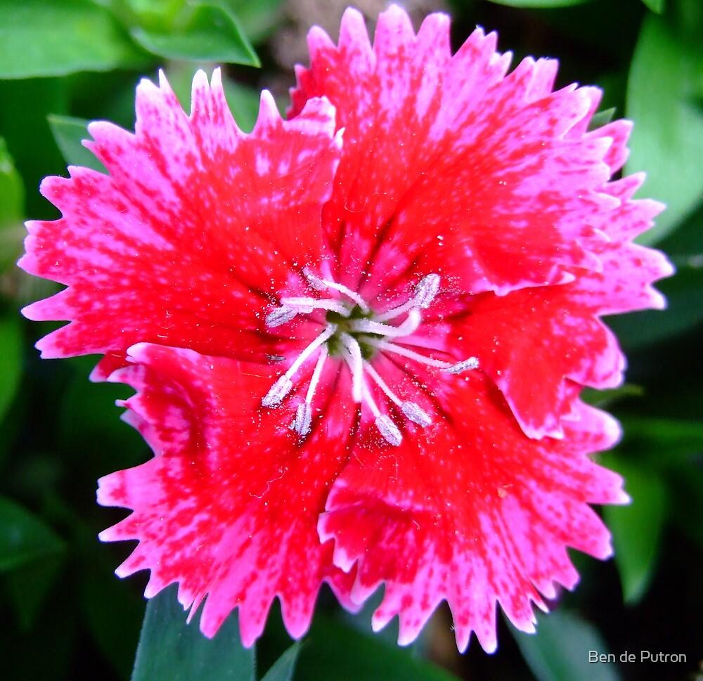Flower in the garden by Ben de Putron