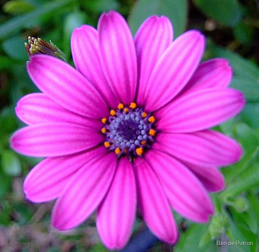 Another Flower.. by Ben de Putron