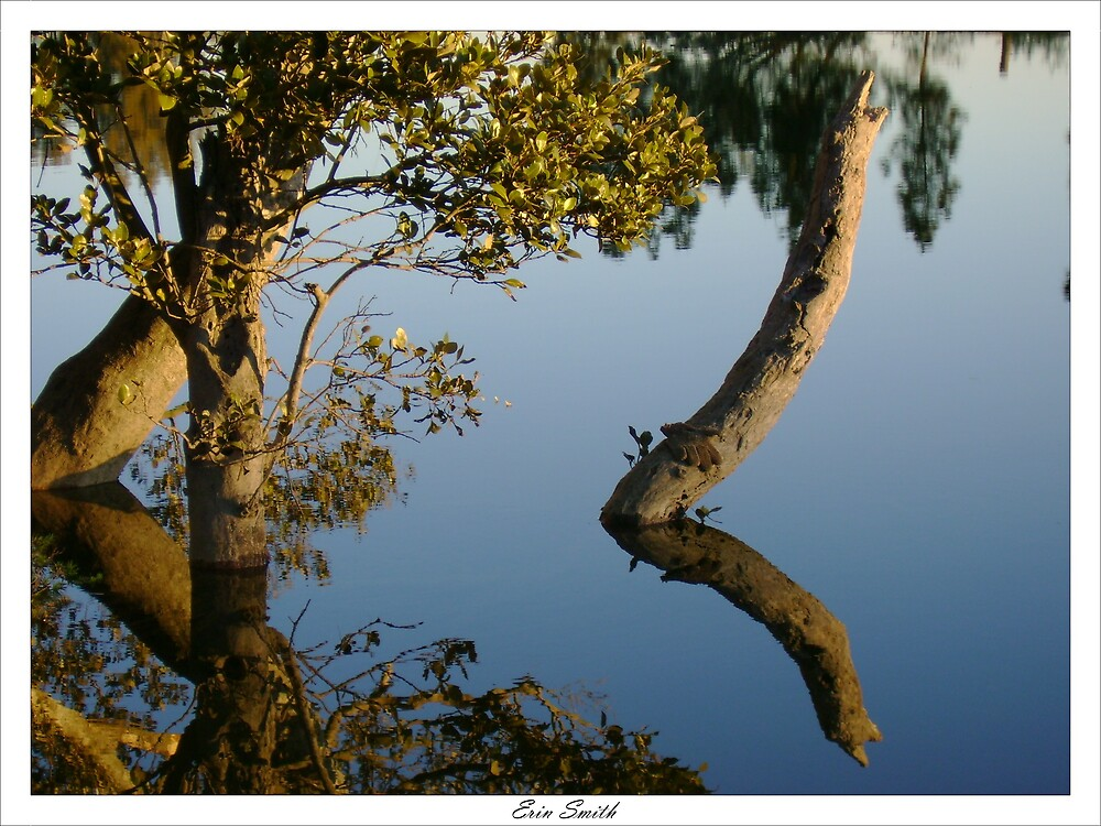 Stumpy Reflections by engride