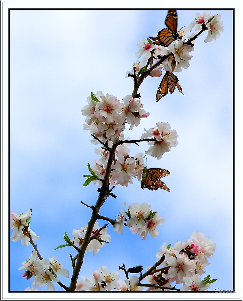 Butterflies and Blossoms 1 by Seesee