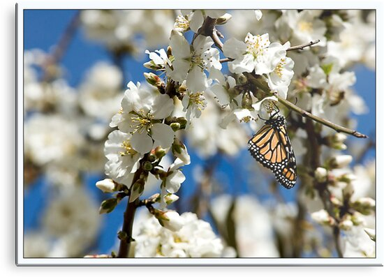 Butterflies and Blossoms 2 by Seesee