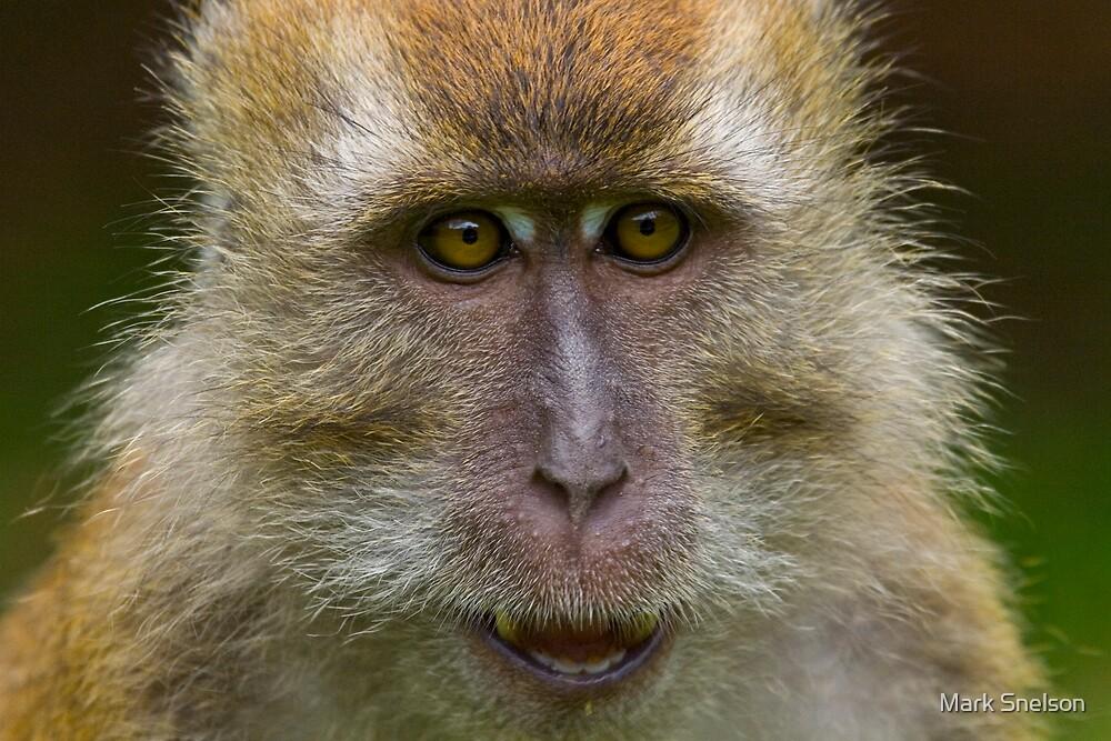 Rhesus Monkey 3 by Mark Snelson