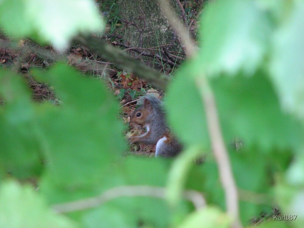 In The Eye Of The Squirrel by Karl187