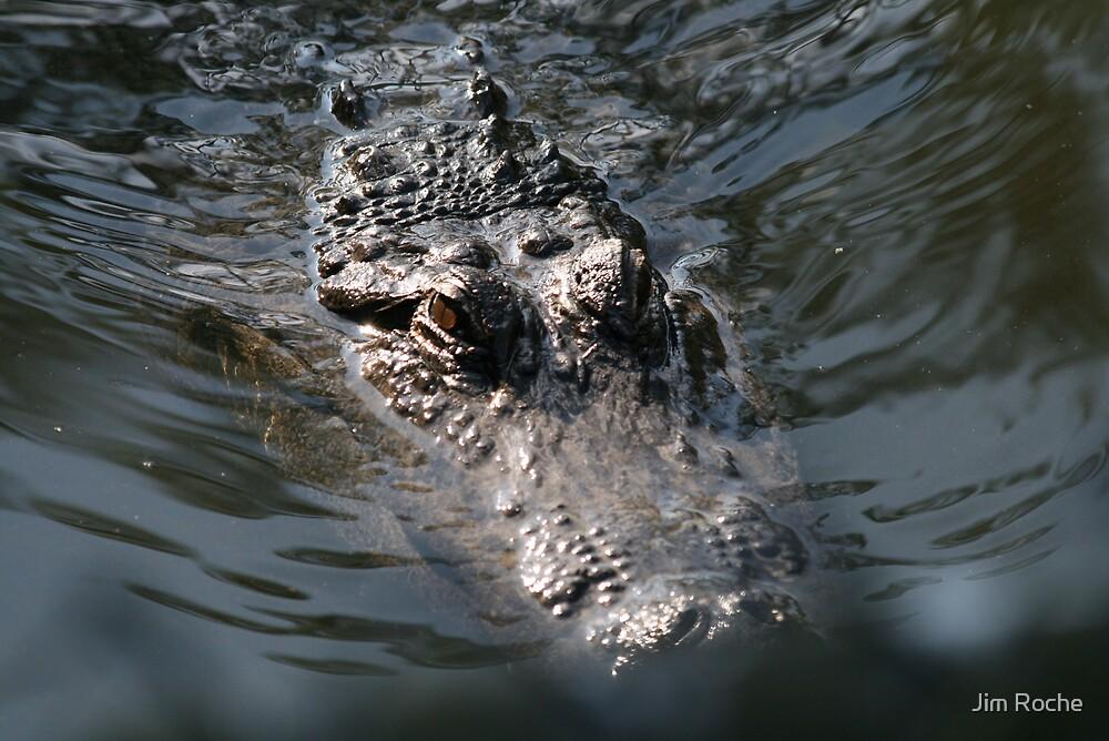 Gator on Patrol by Jim Roche