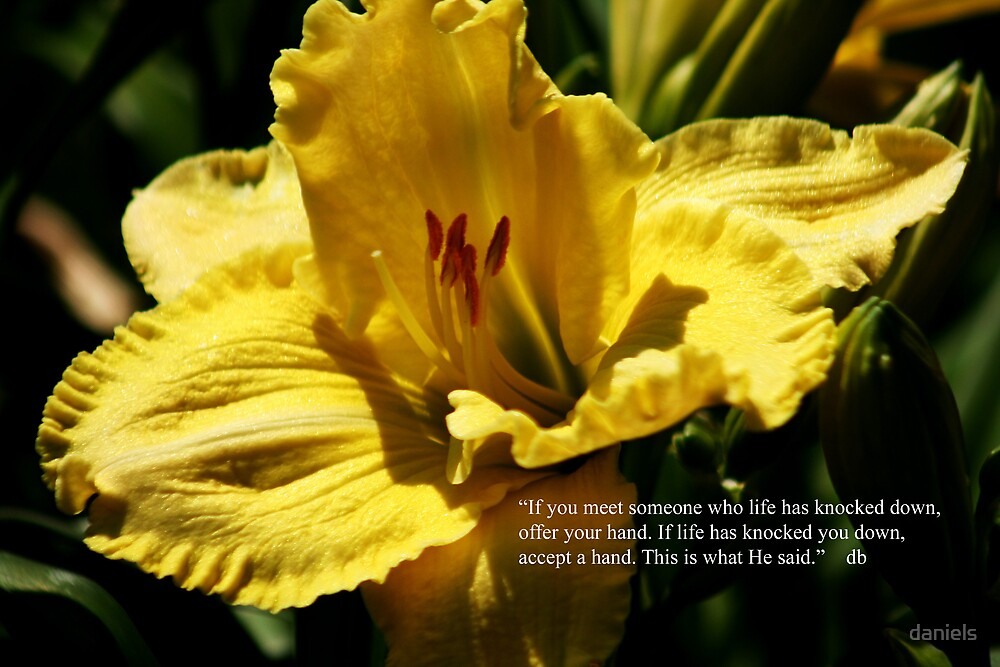 daylily with quote by daniels