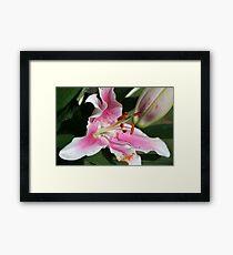 Lillies Framed Print