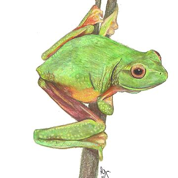 Green Frog by dianeg17