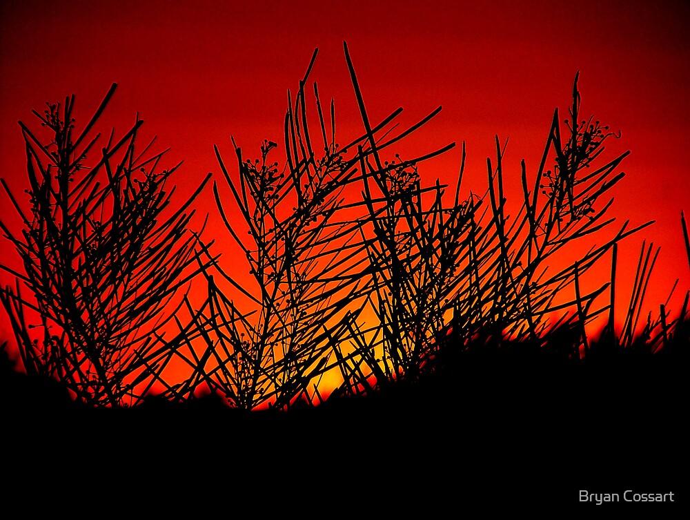Wattle in Silhouette by Bryan Cossart