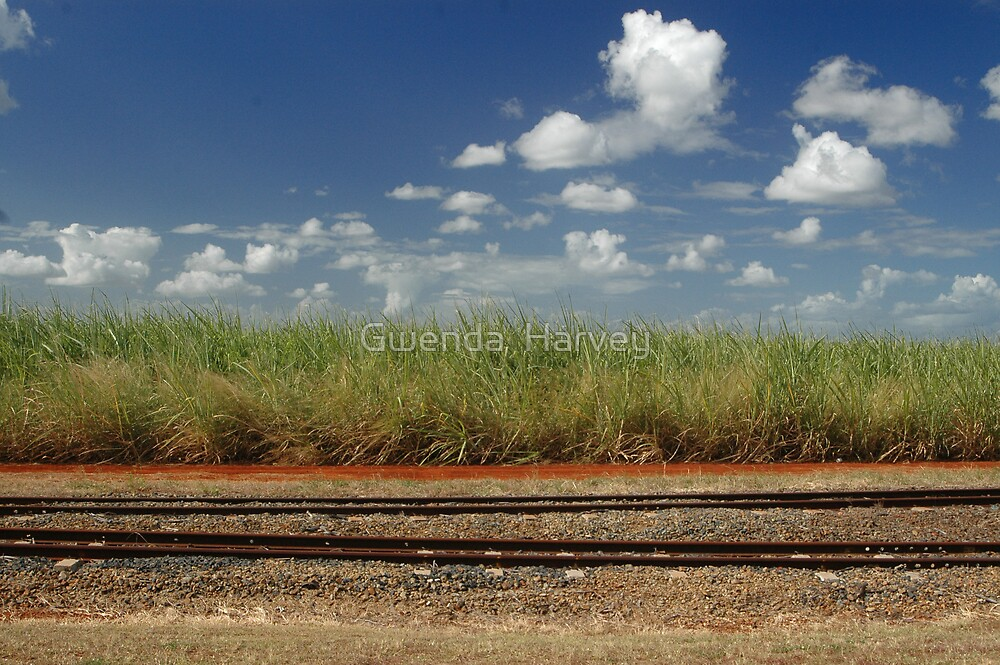 Sagur cane fields8645 by Gwenda  Harvey