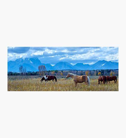 Teton Wild Horses Photographic Print