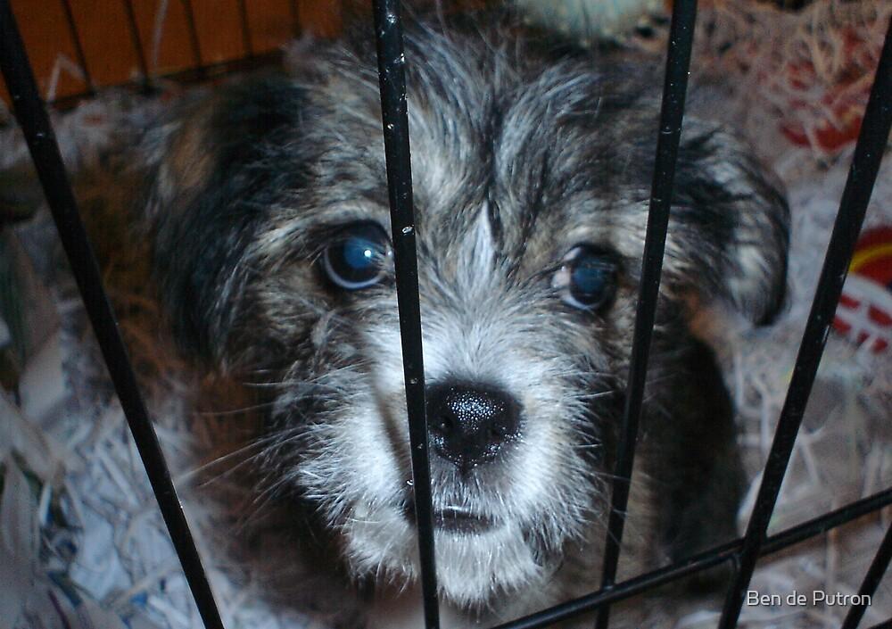 Puppy in Jail by Ben de Putron