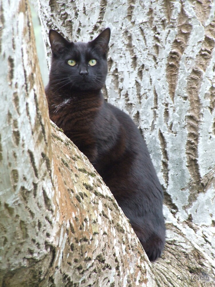 Black  cat in a walnut tree by Paul Martin
