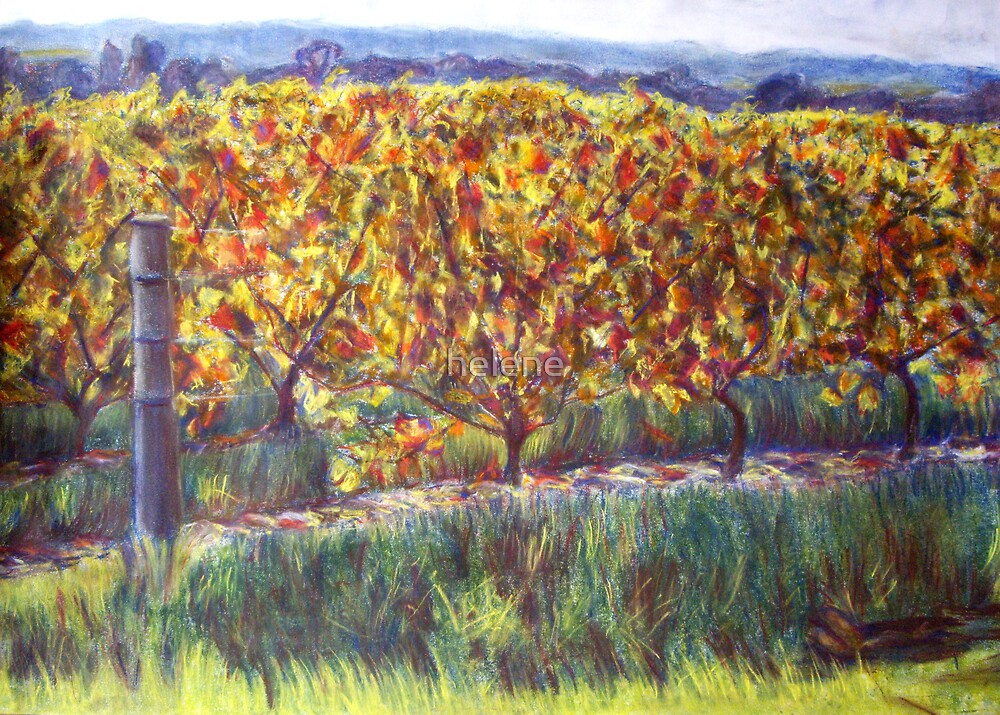 Autumn grapevines by helene
