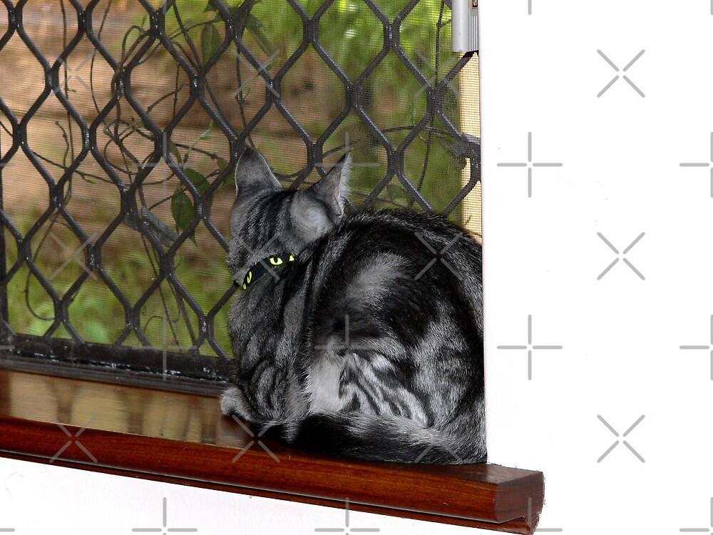 Checking action at the Birdbath by Sandra Chung