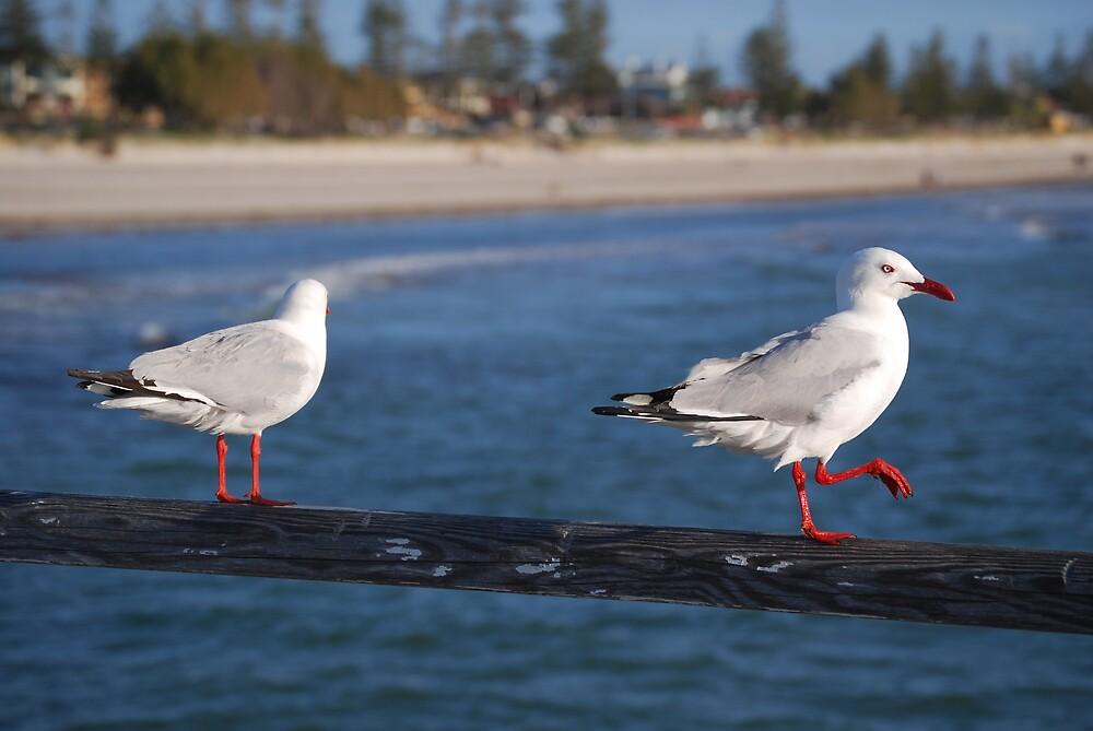 seagulls by Princessbren2006