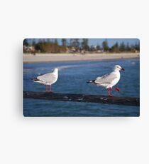 seagulls Canvas Print