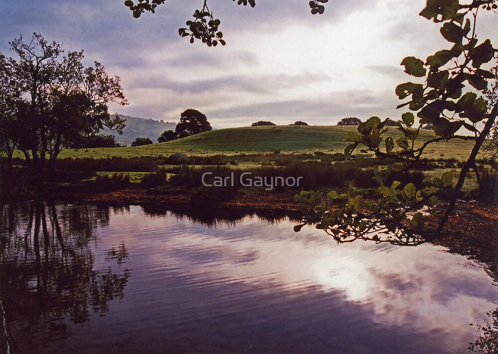 Private Land  by Carl Gaynor