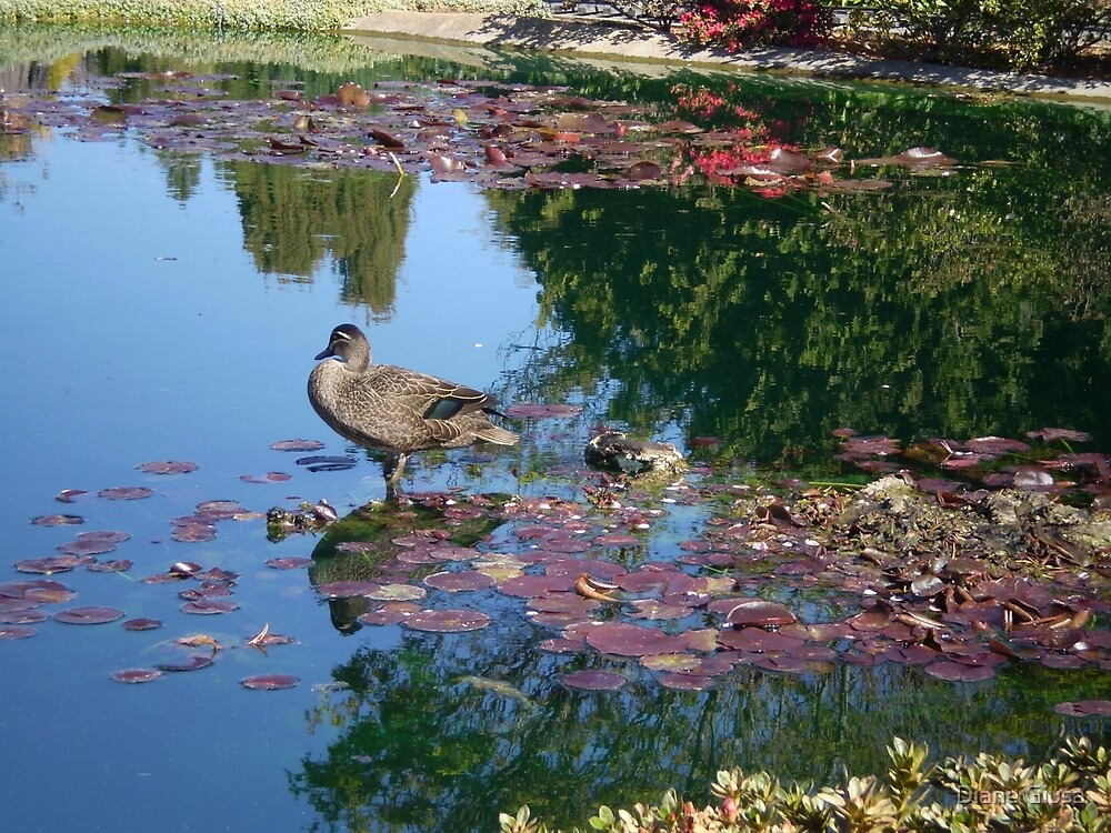 reflections by Diane Giusa
