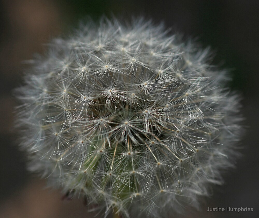 Make a wish as you blow...... by Justine Humphries